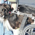 Dog with special needs finds a home in Galion
