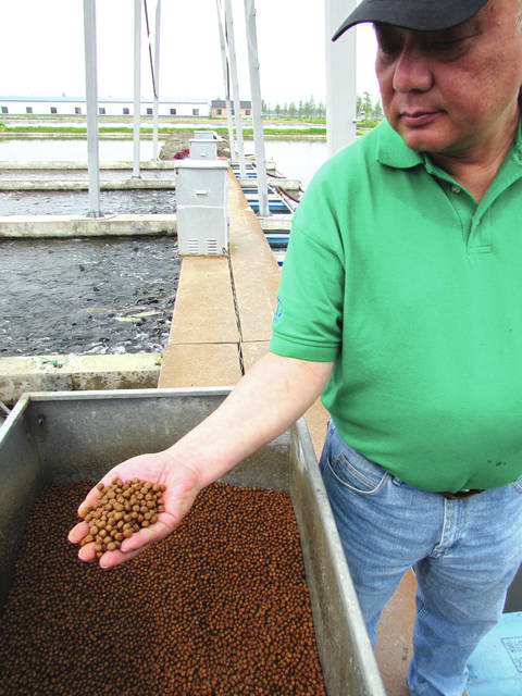Jim Zhang of the U.S. Soybean Export Council, holds a handful of fish feed at an aquaculture facility on the outskirts of Shanghai, China in April, 2016. <em>Rural Life Today</em> editor Gary Brock toured the Chinese fish farm facility to see where much of Ohio&#8217;s soybeans go when exported to China. The fish feed is made of about 50 percent soy meal.